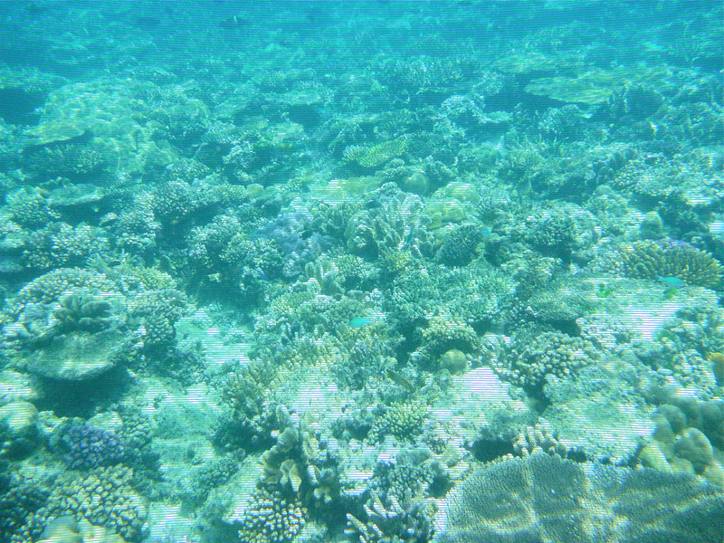 boomer-snorkeling-adventure-fiji