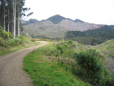 logging_road