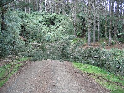 fallen_trees_1