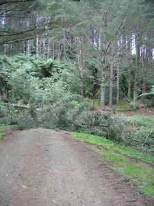 fallen_trees_2