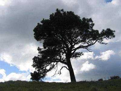 tree_clouds