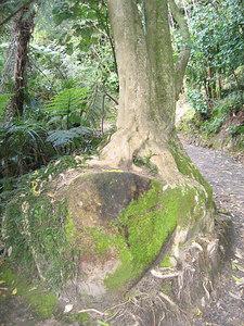 rock_tree