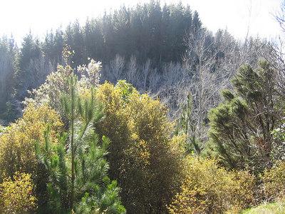 trees_6