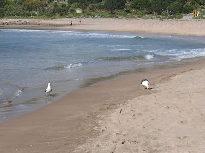 hot_water_beach_19