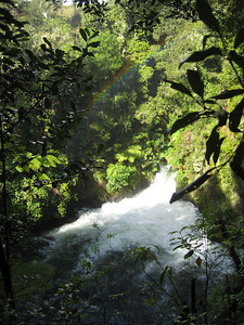 kaituna_river_11