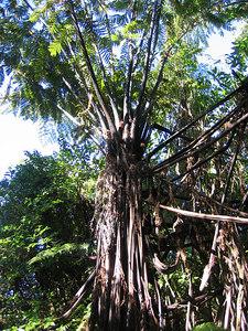 tree_up_2