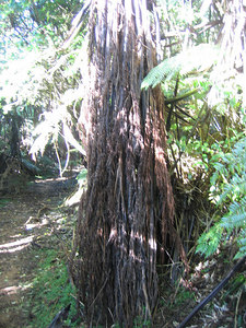 tree_up_1