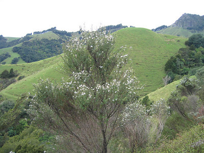 valley_view_3