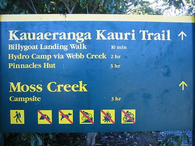 kauaeranga_kauri_trail