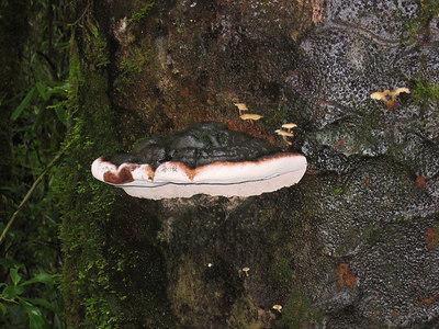 mushrooms_1