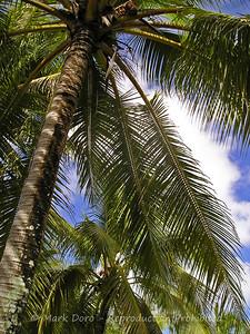 Palms, Vanuatu