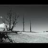 Bryce Canyon 1_0085 copy bw