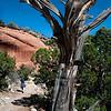 Colorado Natl Monument_0112 copy
