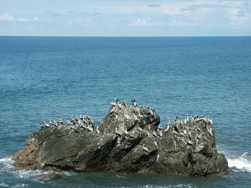 Picaros Island, which serves as a refuge for several species of marine birds including the Brown Boobie, Blue Heron and Brown Pelican.
