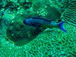 Grey and Blue Fish
