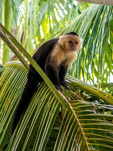 Resort Monkey