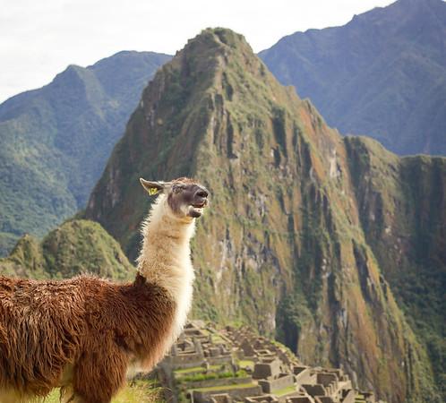 2013-06 Machu Picchu