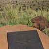 Magersfontein battlefield
