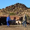 Osfontein Guest Farm bringing sheep to the kraal