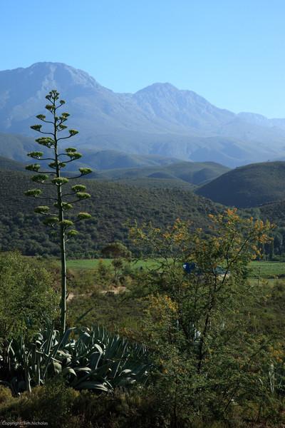 Groenfontein