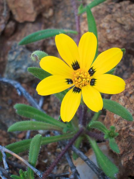 Flowers on Halfmens Pass