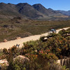 Proteas in the plateau section of the Swartberg Pass