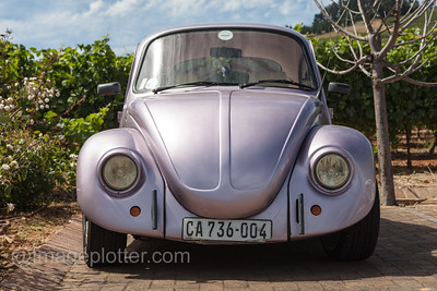 Pink Metallic Beetle, Cape Winelands, South Africa
