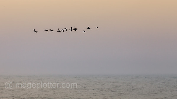 Flock Of Birds Flying Into The Sunset, Cape Peninsula, South Africa