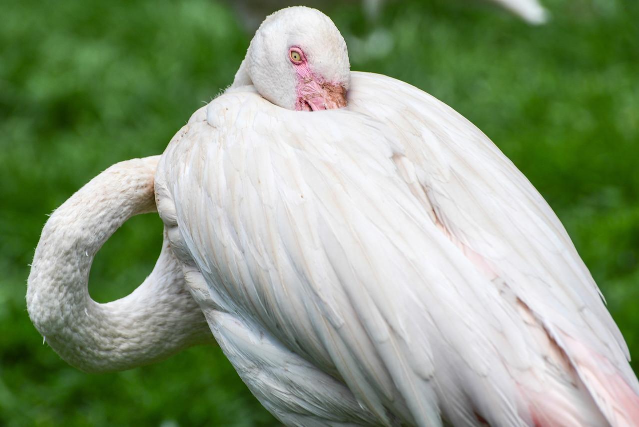 Bird at the Joburg Zoo