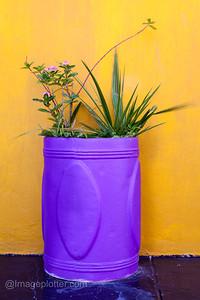 Flower Pot, Bo Kaap Malay Quarter, Cape Town, South Africa