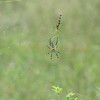 Spider is about two inches long.