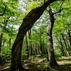 Triple helix trees!