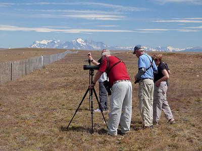 Patagonia birding