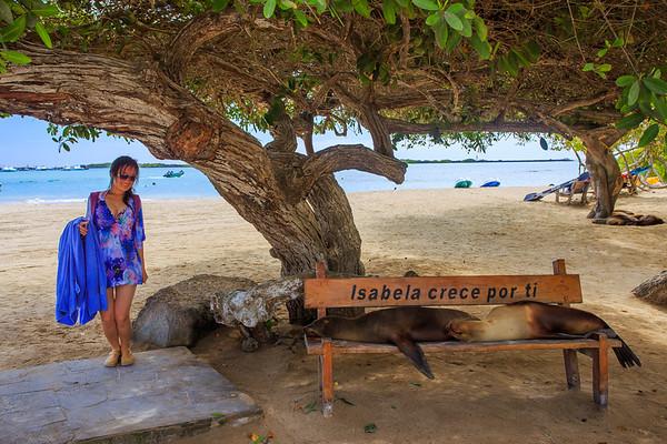 Resting Sea Lion, Isabela