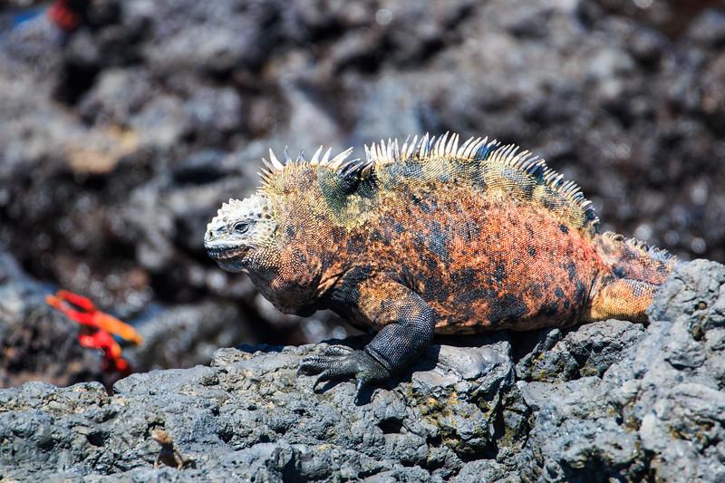 Galapagos: Las Tintoreras