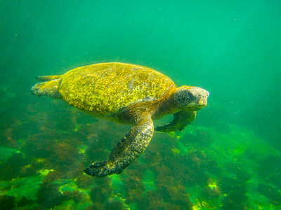 Galapagos: Los Tuneles