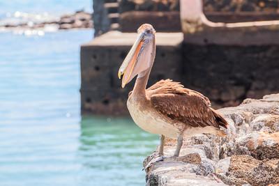 Galapagos: Santa Cruz