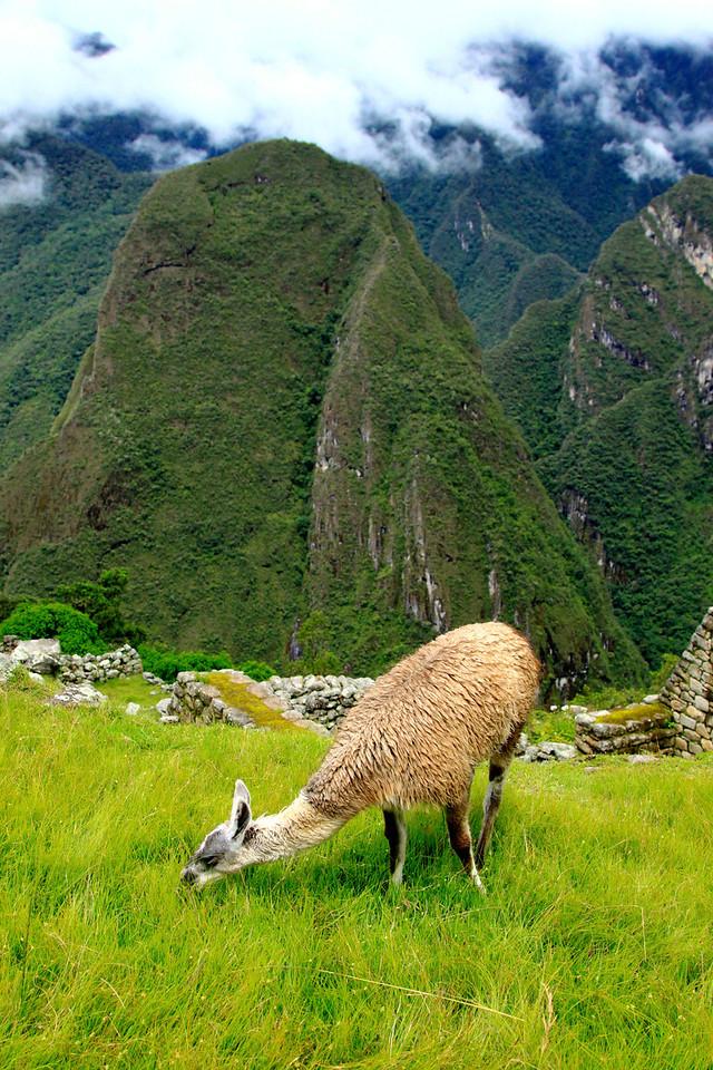 Machu Picchu<br /> Peru, December 2012