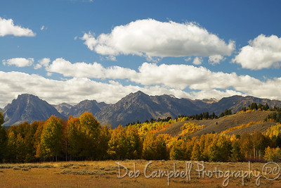 Fall color near Moran Junction Grand Teton National Park
