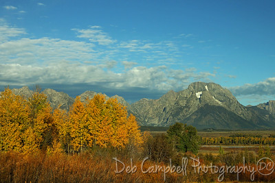 Fall color and Mount Moran Grand Teton National Park
