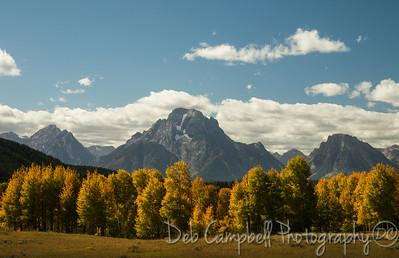 Fall color and Mount Moran Grand Teton National Park