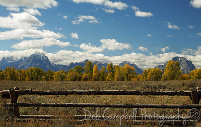 Tetons range, fall color and a buck and rail fence Grand Teton National Park