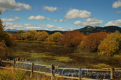 Pond and Willows at Moran near Grand Teton National Park