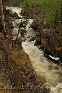 Firehole River Yellowstone National Park