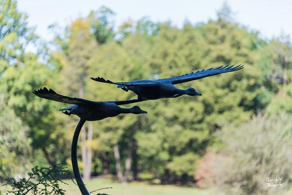 Birds Aflight