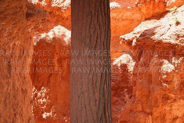 Cu tree in Bryce