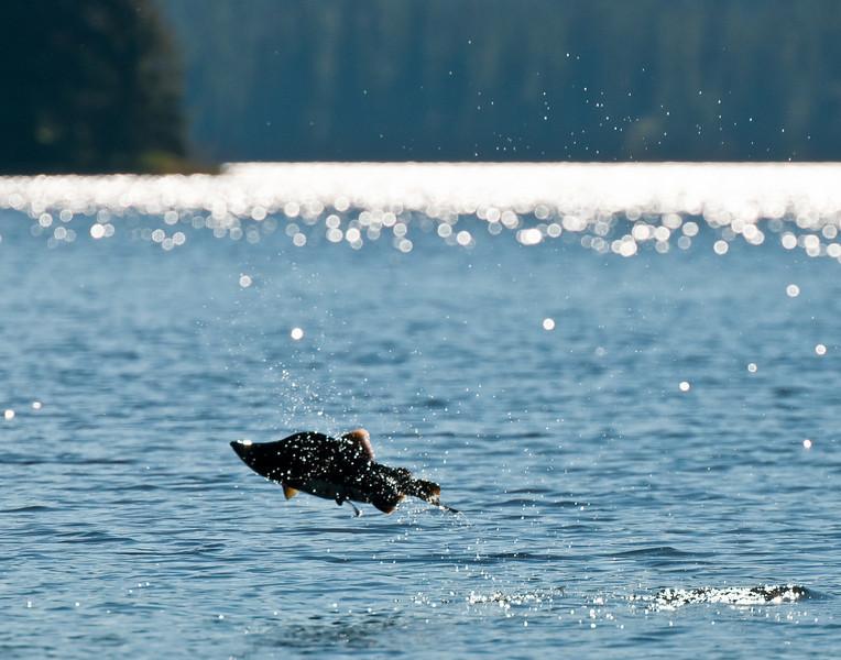 jumping humpy, Luck Lake