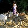 Local farmer.