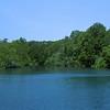 Mangrove trees.