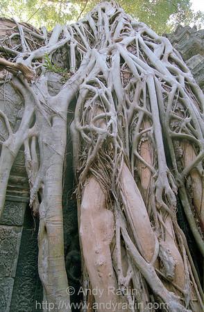Banyon Roots